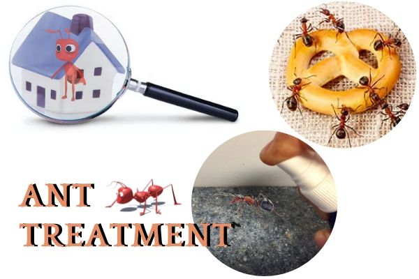 ant treatment adelaide