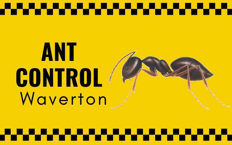 Ants Control Waverton
