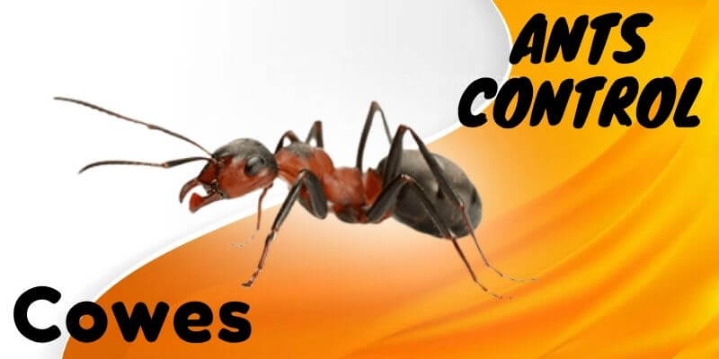 Ants control Cowes