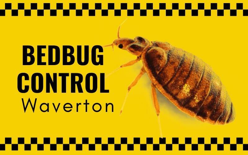 Bedbug control Waverton