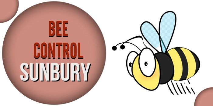 bee control sunbury