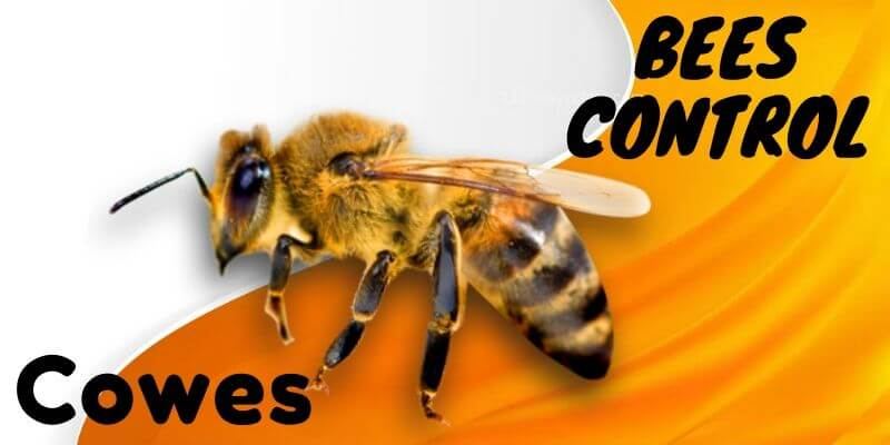 Bees control Cowes