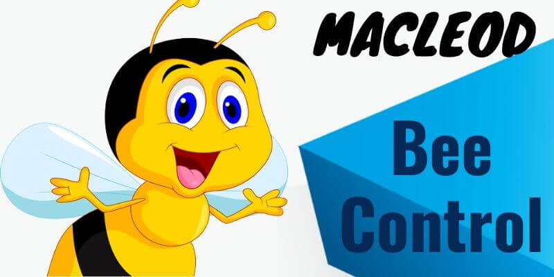 Bees control Macleod