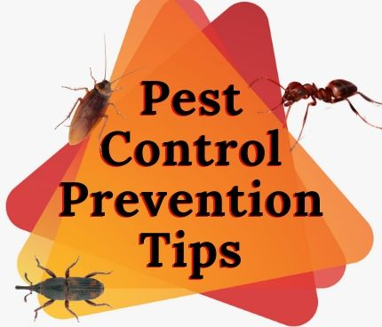 Cockroach Pest Control Services in Bell Park