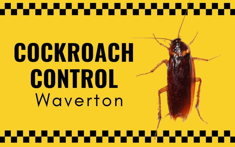 Cockroach control Waverton