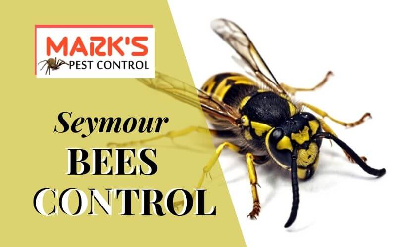 Bees control Seymour