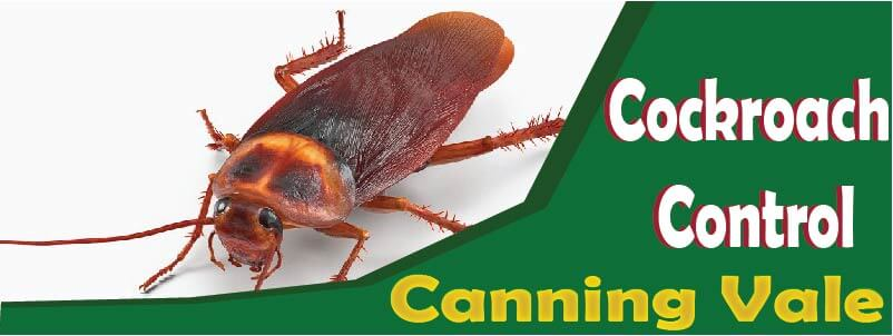 Cockroach Control Canning Vale