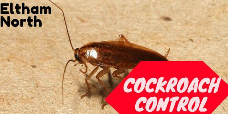 Cockroach control Eltham North