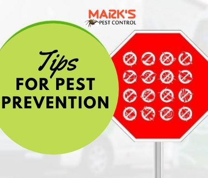 Tips for Pest Control Prevention
