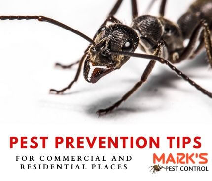 Cockroach Pest Control Services in Seymour