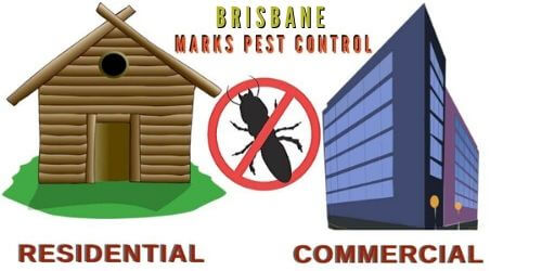 residential & commercial pest control brisbane