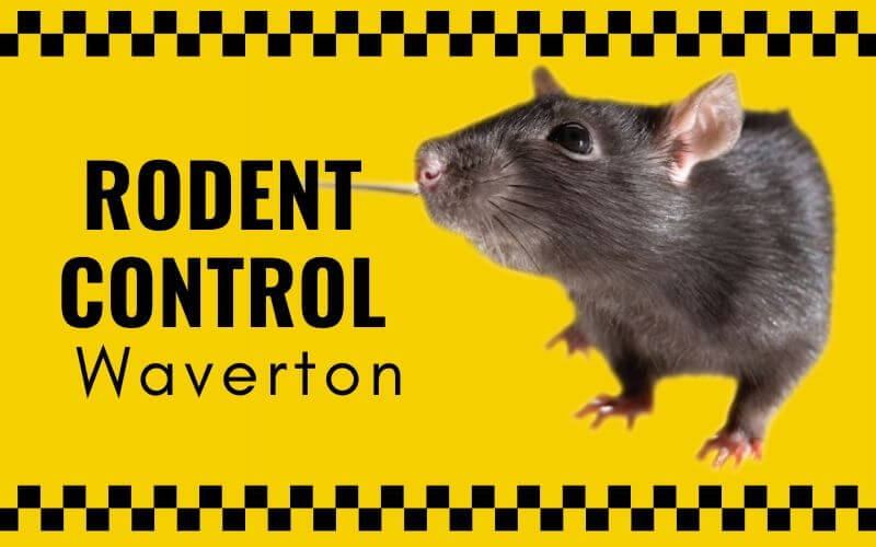 Rodent control Waverton