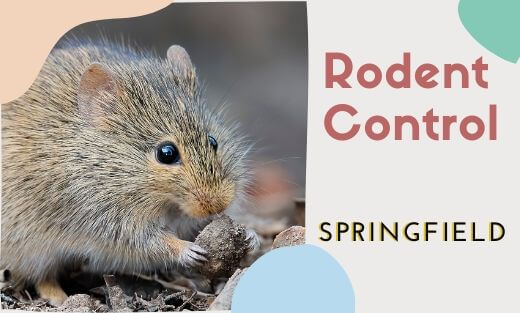 Rodent Pest Control Springfield