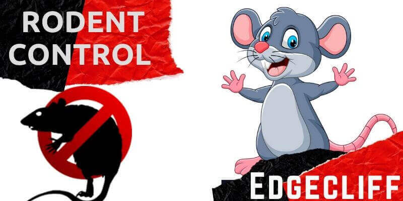 Rodent control Edgecliff
