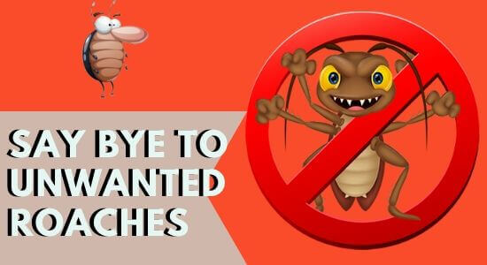 say bye to unanted roaches-cockroach control perth