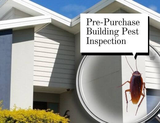 pre-purchase pest control burnside