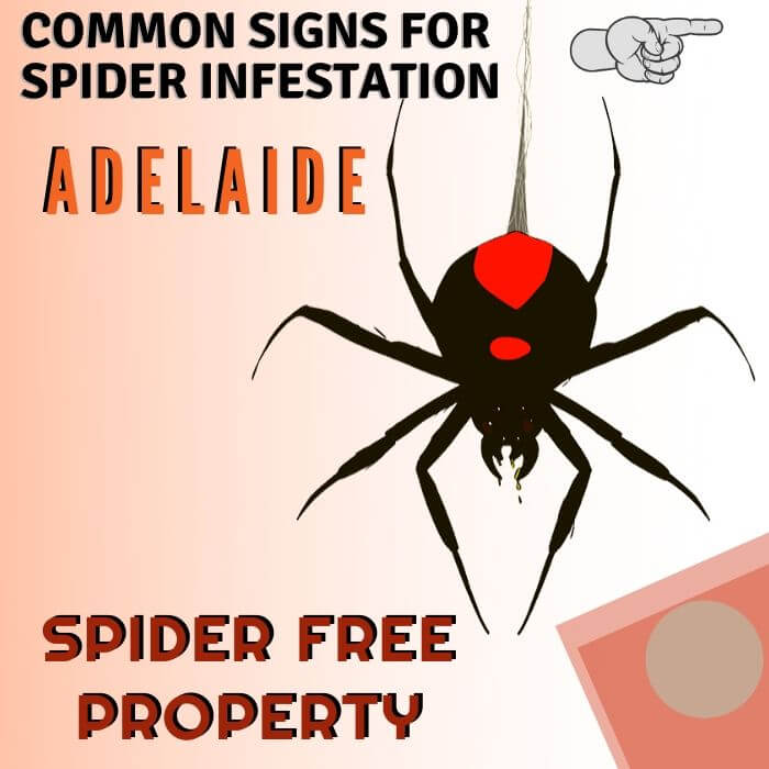 sign of spider