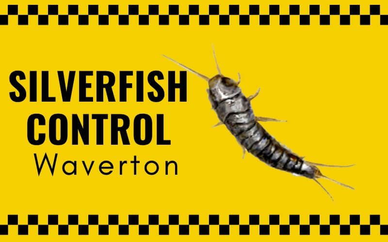 Silverfish control Waverton