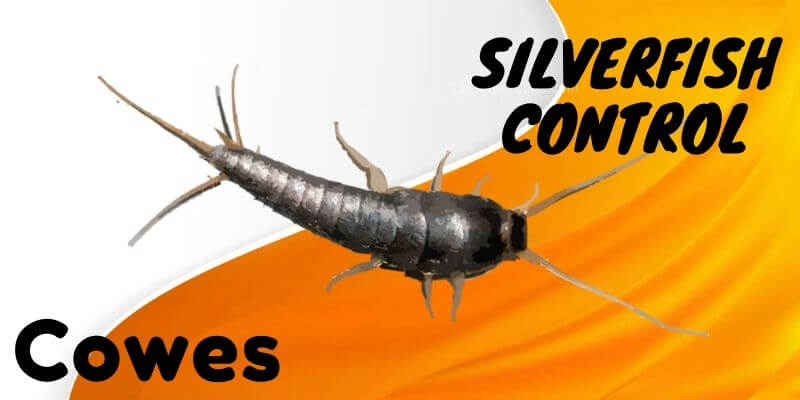 Silverfish control Cowes