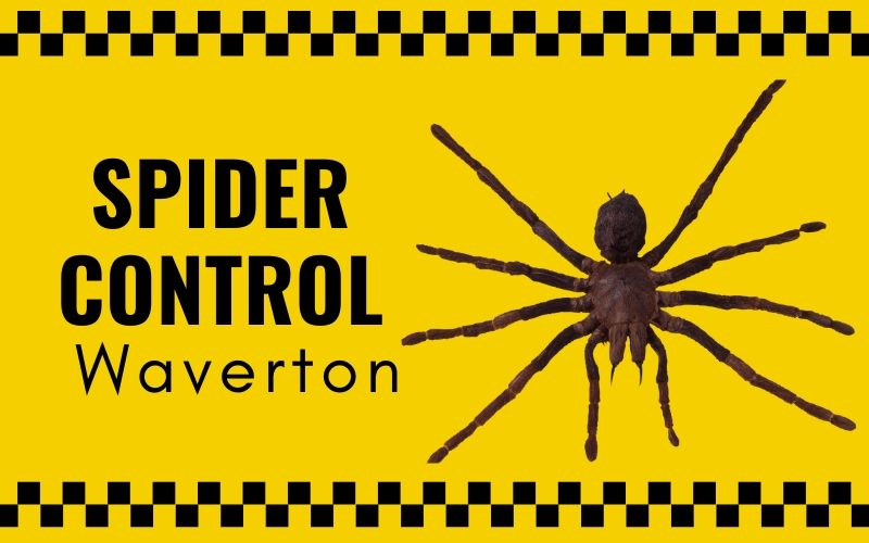 Spider control Waverton