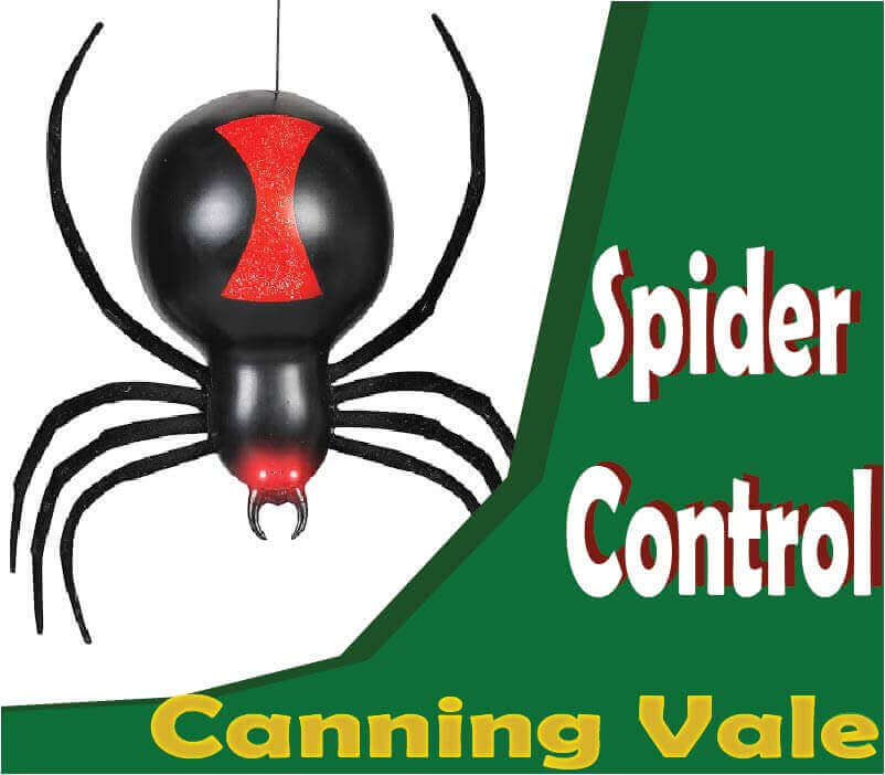 Spider Control Canning Vale