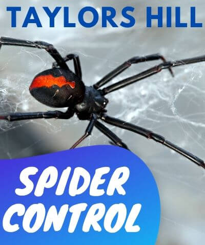 Spider Control Taylors Hill