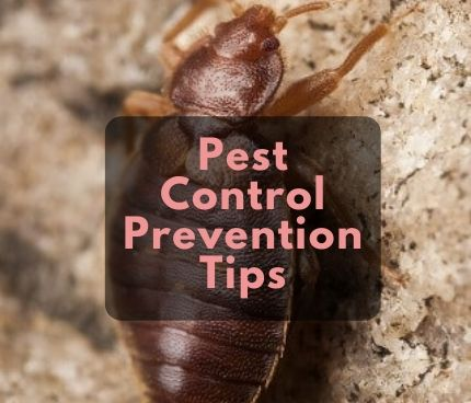 Cockroach Pest Control Services in Taylors Hill