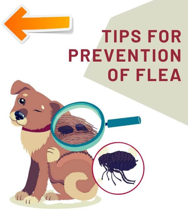 tips for flea prevention