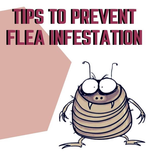tips to prevent flea infestation