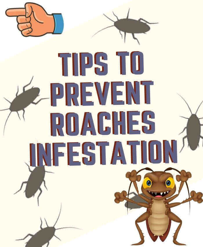 tips to prevent roaches