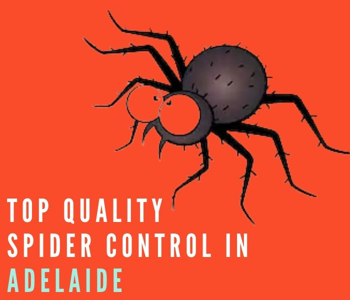 top quality spider control adelaide
