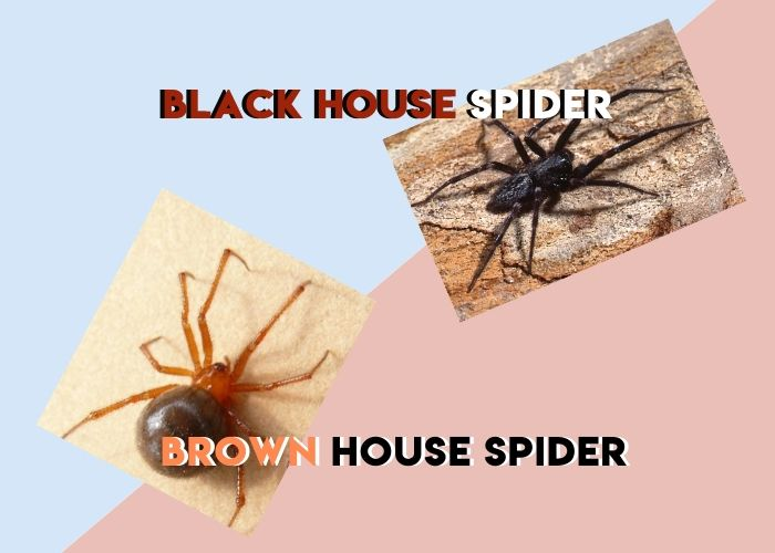 type of spider