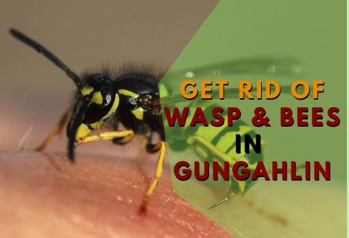 Wasp and Bees control Gungahlin