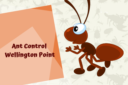 Ant Control Wallingpoint