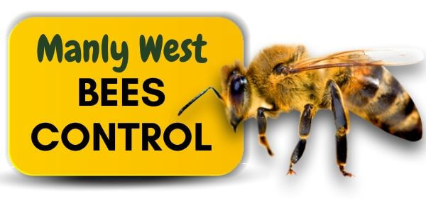 Bees control Manly West