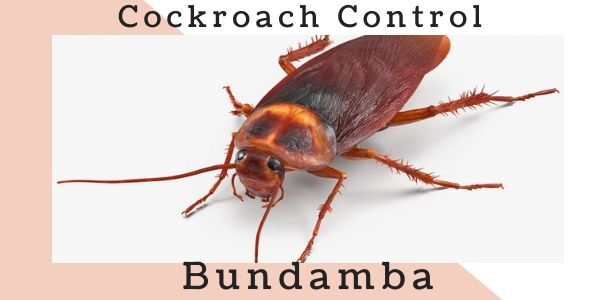 Cockroach control Bundamba