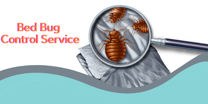 Marks Bed bug control service