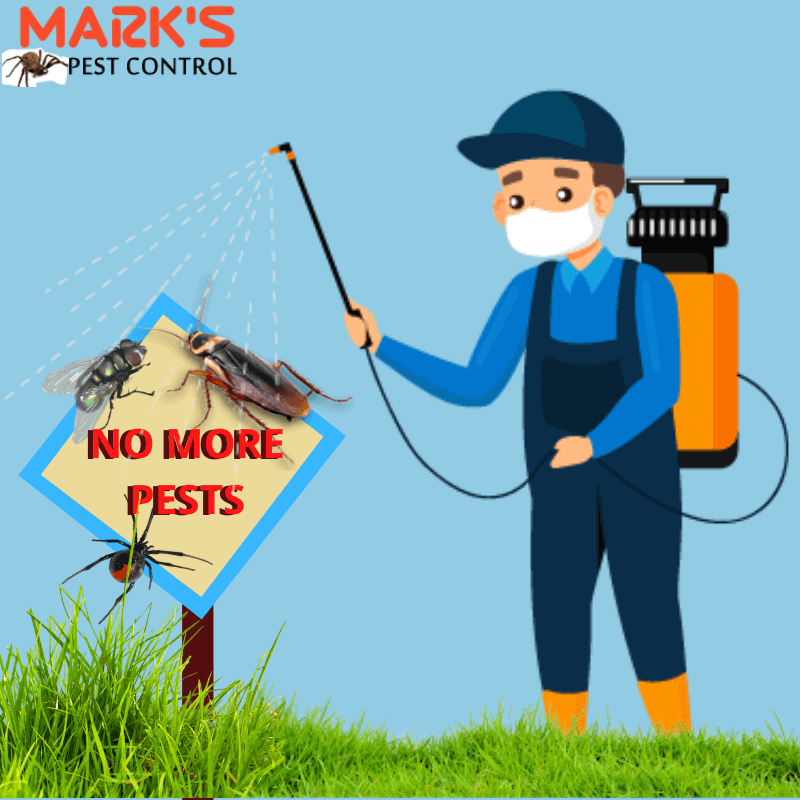Marks Pest Control Service in Helensvale