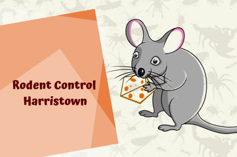 Rodent Control Harristown