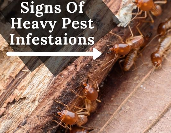 Pest Infestation Control