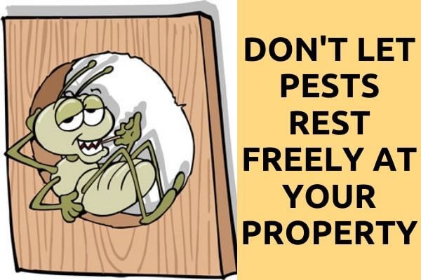 All kind of pest removal
