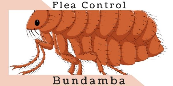 Flea control Bundamba