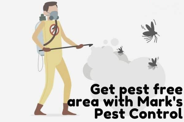 Pest Control Ninderry