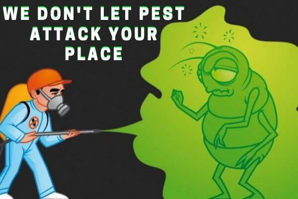 Pest Control Boondall