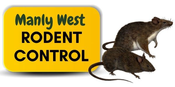 Rodent control Manly West