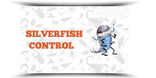 silverfish Control Red Hill