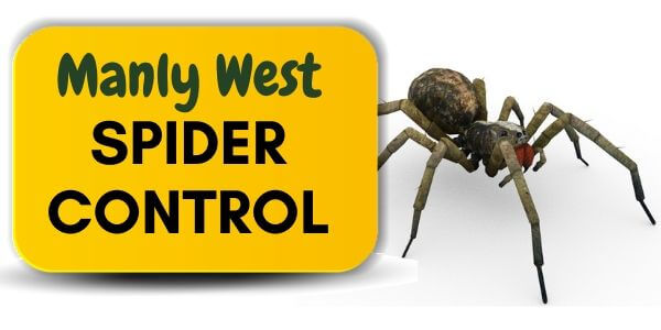 Spider control Manly West