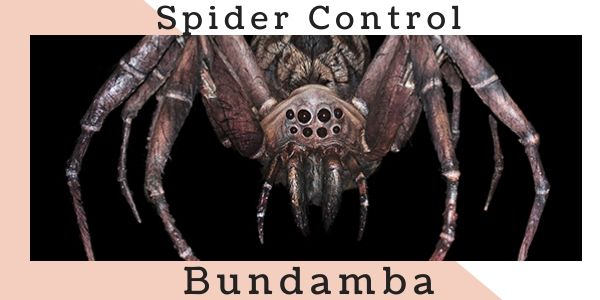 Spider control Bundamba
