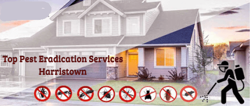 Pest Control sSolutions In Harristown