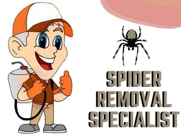 Spider Removal services